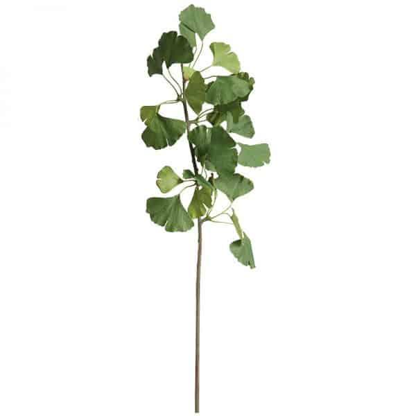 Ginkgo leaf branch 1